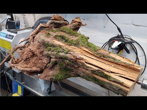 Woodturning – Hawthorn Root Lamp